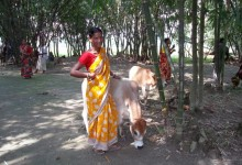 Meena Rani Sarkar with her cow purchased with revolving fund